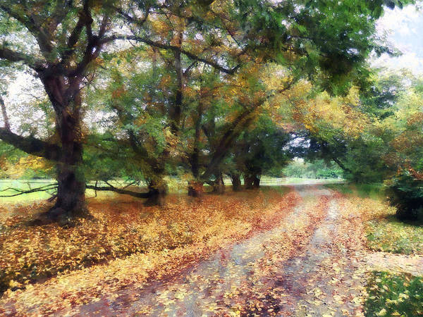 Photograph - Along The Path Under The Trees by Susan Savad