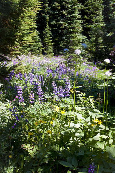 Photograph - Alpine Meadow IIi At Mount Rainier by David Patterson