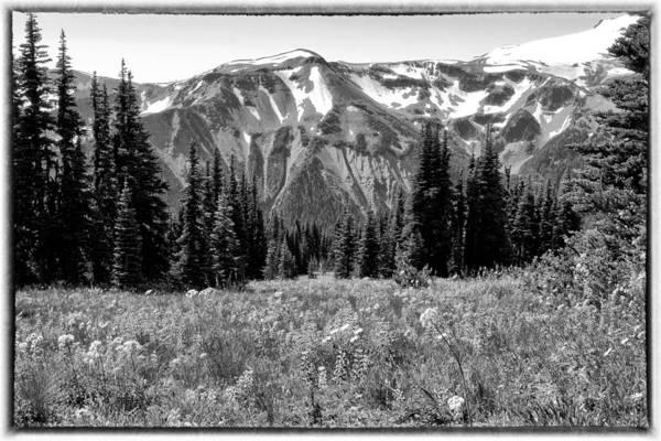 Photograph - Alpine Meadow Viii At Mount Rainier by David Patterson