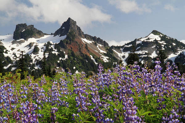 Photograph - Alpine Wild Flowers Rainier National Park by Pierre Leclerc Photography
