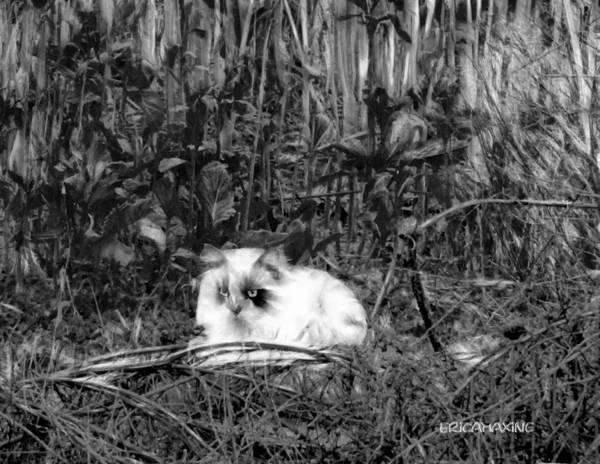 Photograph - Always Hunting B-w by Ericamaxine Price