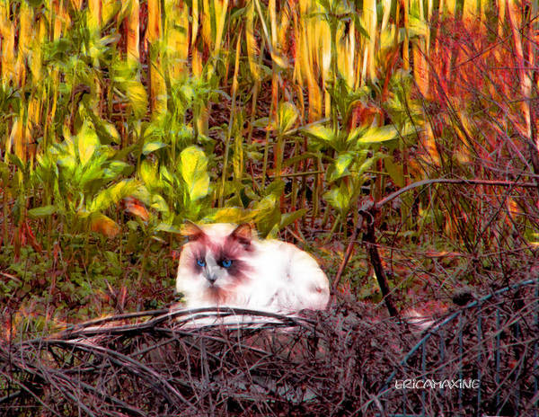 Photograph - Always Hunting Color by Ericamaxine Price