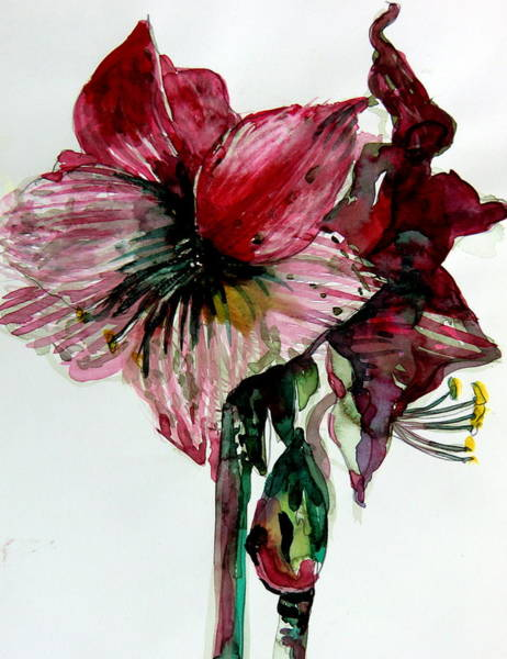 Organic Garden Drawing - Amaryliss by Mindy Newman