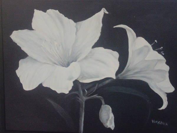 Amaryllis Art Print by Virginia Butler