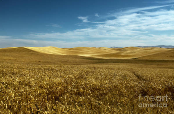 Photograph - Amber Waves Of Golden Grain by Beve Brown-Clark Photography