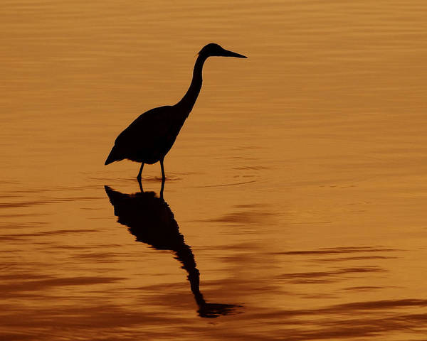 Photograph - An Early Morning Dip by Tony Beck