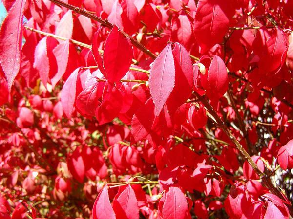 Photograph - An Ohhh Fall Color by Susan Kinney