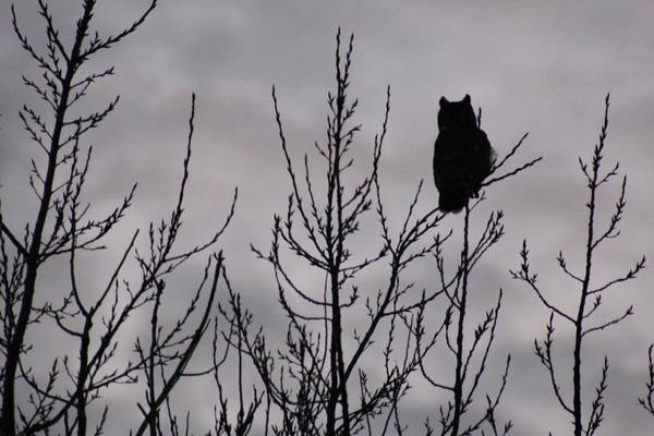 Christy Photograph - An Owl Silhouette by Christy Patino