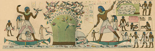 Wall Art - Photograph - Ancient Egypt, Bird Hunting by Science Source