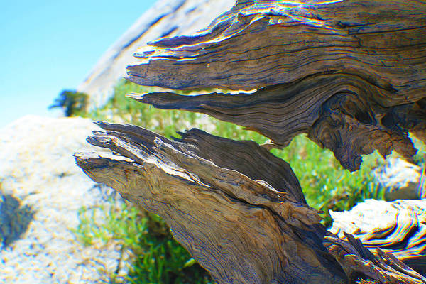 Photograph - Ancient Tree Close Up by M Valeriano