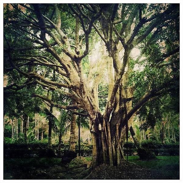 Ancient Photograph - Ancient Tree by Natasha Marco