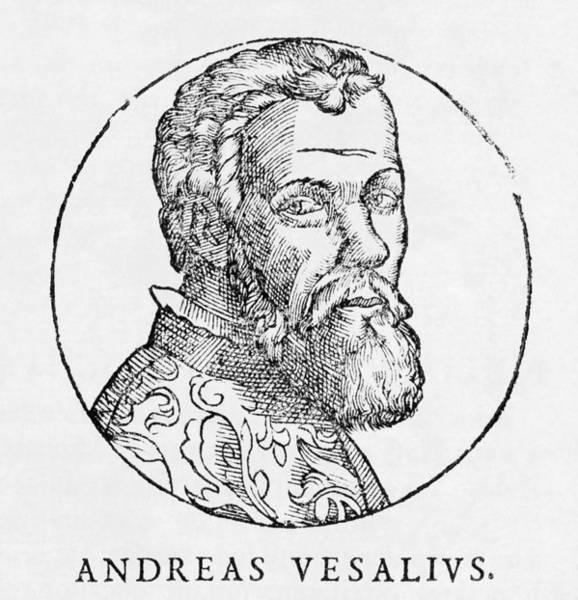 De Humani Corporis Fabrica Photograph - Andreas Vesalius, Dutch Anatomist by Middle Temple Library