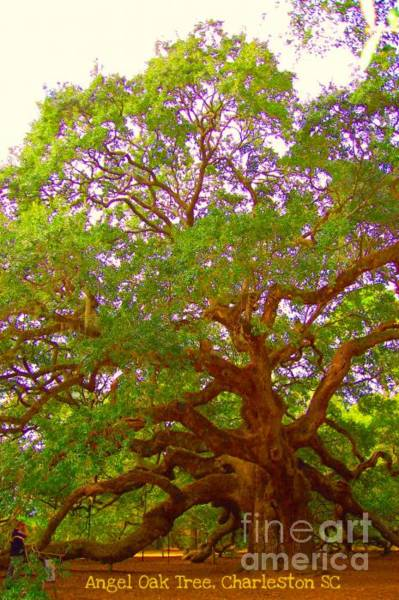 Photograph - Angel Oak Tree1 by Donna Bentley