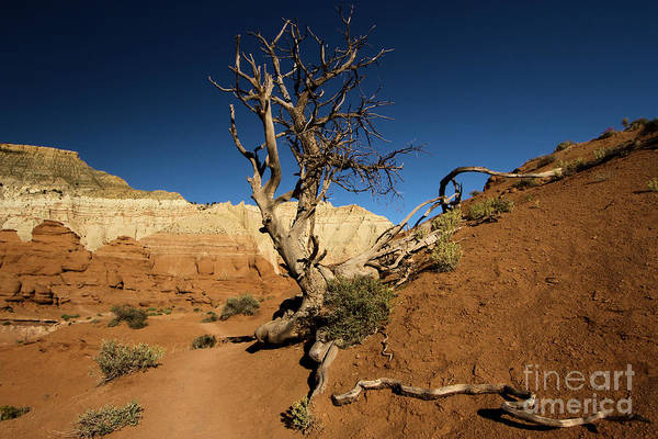 Photograph - Angels Palace At Kodachrome Basin State Park by Adam Jewell