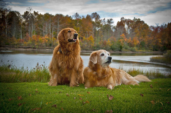 Photograph - Angus And Lucky by Williams-Cairns Photography LLC
