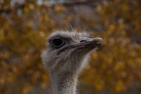 Photograph - Annoyed Bird by Trish Tritz