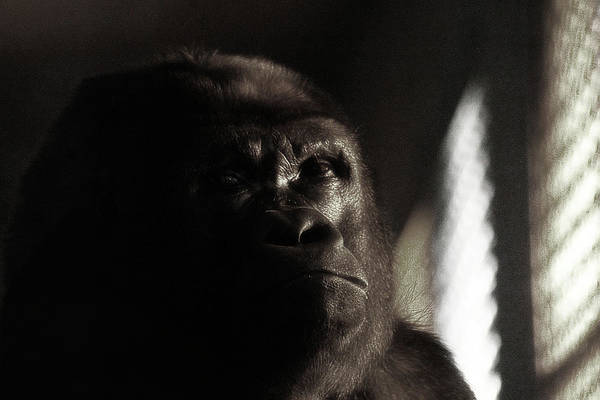 Photograph - Annoyed by Scott Hovind