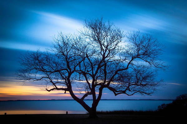 Photograph - Another Favorite Tree by Joye Ardyn Durham