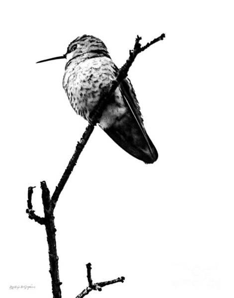 Phoebe Digital Art - Another Little Bird by Rhonda Strickland