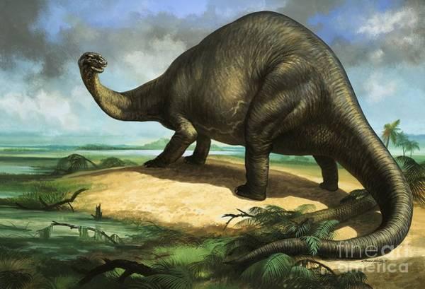 Big Island Painting - Apatosaurus by William Francis Phillipps