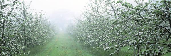 Wall Art - Photograph - Apple Orchard by Jeremy Walker