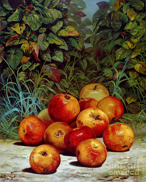 Photograph - Apples, 1868 by Granger