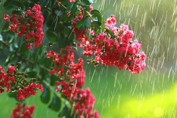 Photograph - April Showers by Jose Rodriguez