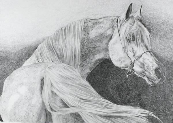 Grass Field Drawing - 'arabian Grey' by Sue  Miles