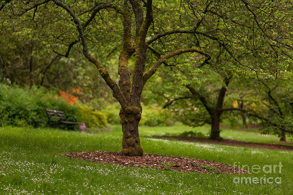 Rhododendrons Photograph - Arboretum Grove by Mike Reid