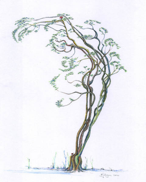 Wall Art - Drawing - Arched Dancer Re-imagined by Mark Johnson
