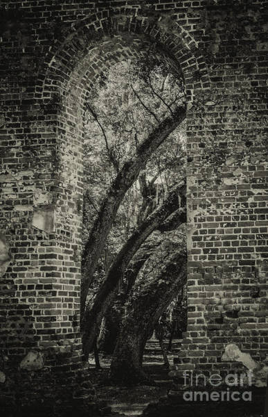 Photograph - Arches by David Waldrop