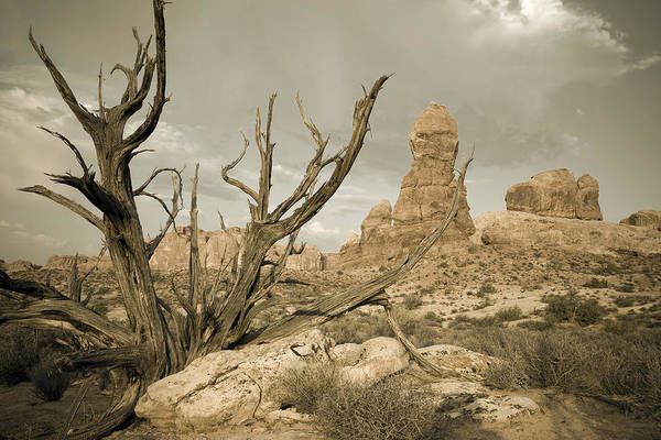 Photograph - Arches Desert Tree by Mike Irwin
