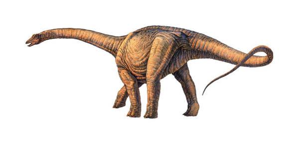 Argentinosaurus Dinosaur Art Print by Joe Tucciarone