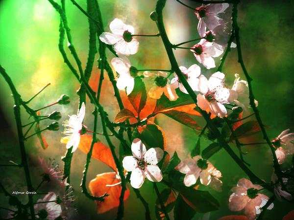Armonia En La Naturaleza Art Print