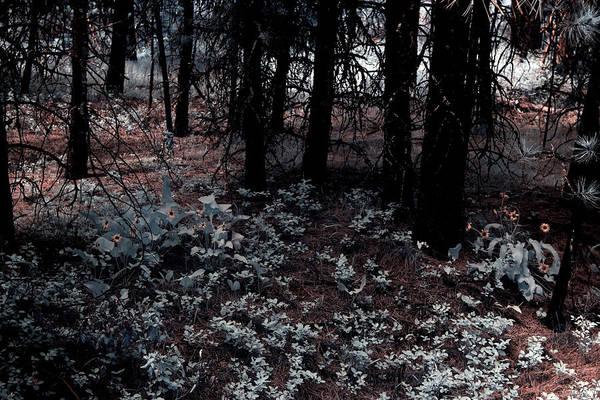 Balsamorhiza Sagittata Photograph - Arrowleaf Balsamroot by One Rude Dawg Orcutt