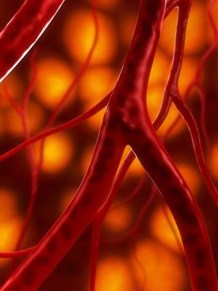 Wall Art - Photograph - Arteries, Artwork by Sciepro