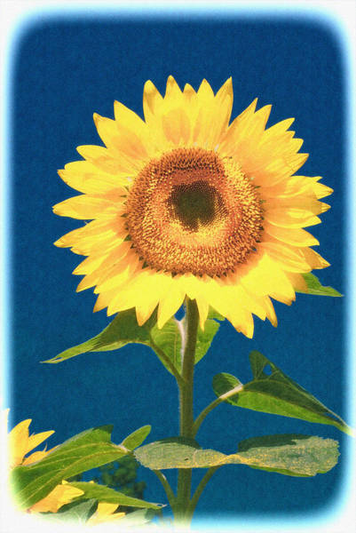 Photograph - Artsy Sunflower by Nancy De Flon