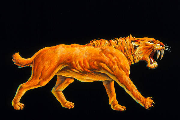 Smilodon Wall Art - Photograph - Artwork Of A Sabre-toothed Cat (smilodon Sp.) by Joe Tucciarone
