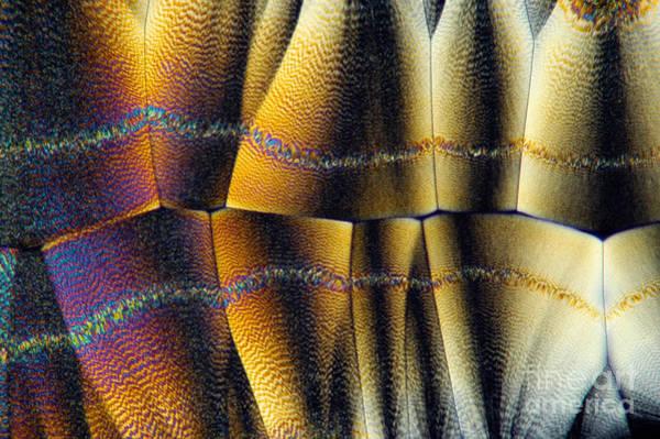 Photograph - Ascorbic Acid Crystal Chain by Raul Gonzalez Perez