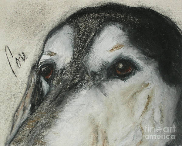 Sight Hound Drawing - At A Glance by Cori Solomon