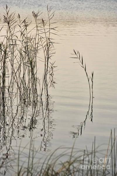 Wall Art - Photograph - At The Lake by Wedigo Ferchland