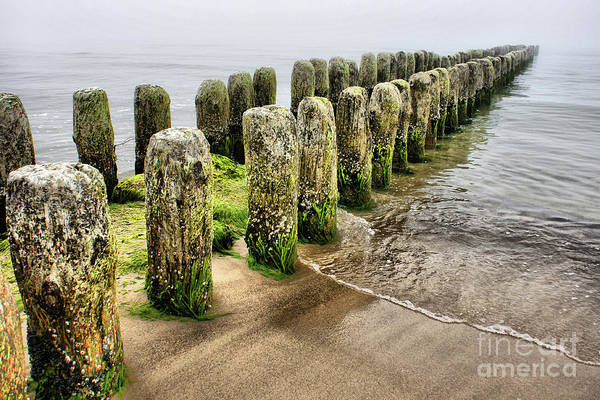 Photograph - At The Shore by Mareko Marciniak