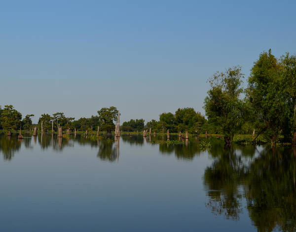 Photograph - Atchafalaya Basin 16 by Maggy Marsh