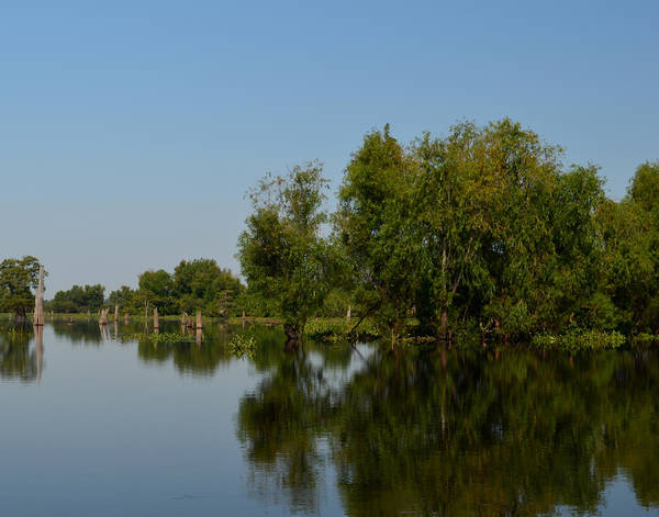 Photograph - Atchafalaya Basin 17 by Maggy Marsh