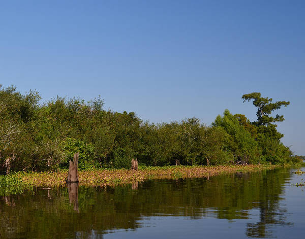 Photograph - Atchafalaya Basin 24 by Maggy Marsh