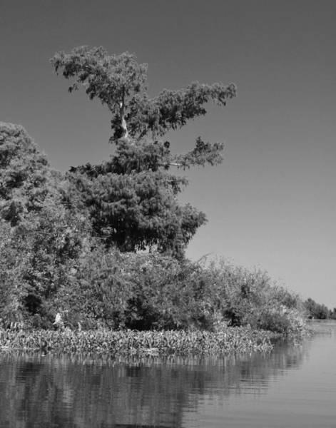 Photograph - Atchafalaya Basin 25 by Maggy Marsh