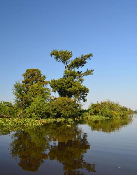 Photograph - Atchafalaya Basin 26 by Maggy Marsh