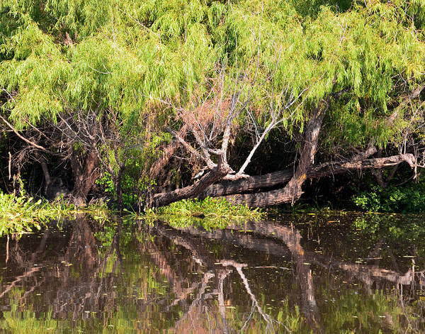 Photograph - Atchafalaya Basin 3 by Maggy Marsh