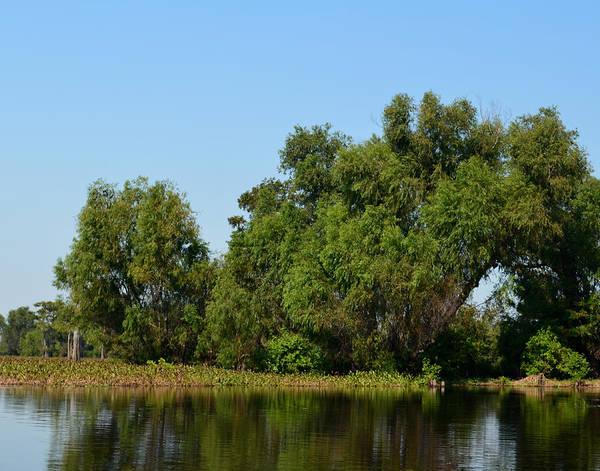 Photograph - Atchafalaya Basin 34 by Maggy Marsh