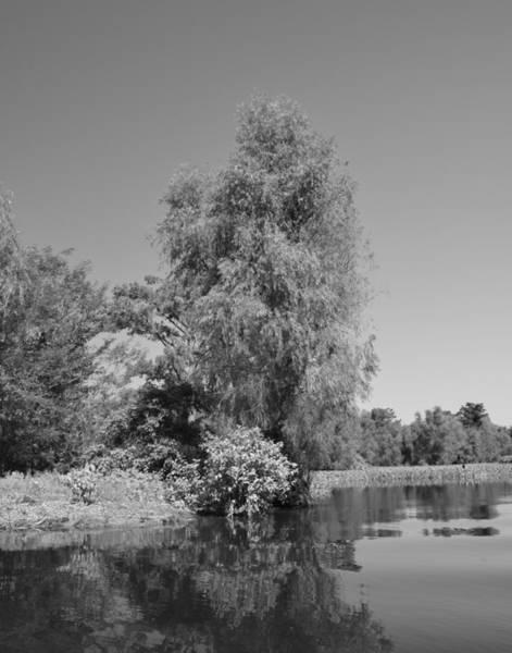 Photograph - Atchafalaya Basin 38 by Maggy Marsh